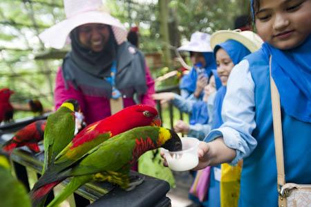 A hora de alimentação dos papagaios é sempre um momento de excitação para os mais novos