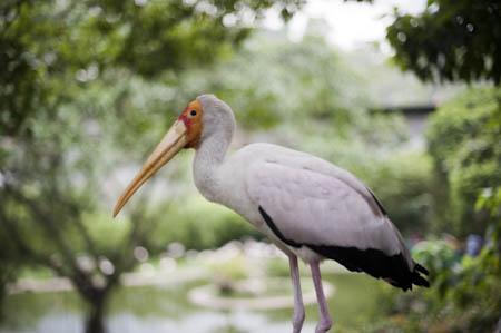 Alguns habitantes do Bird Park andam livremente pelo espaço do parque