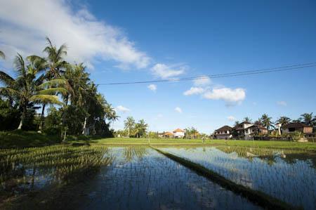 Ubud é um lugar tranquilo por natureza, mas no Niepy Day essa característica alcança dimensões inimagináveis