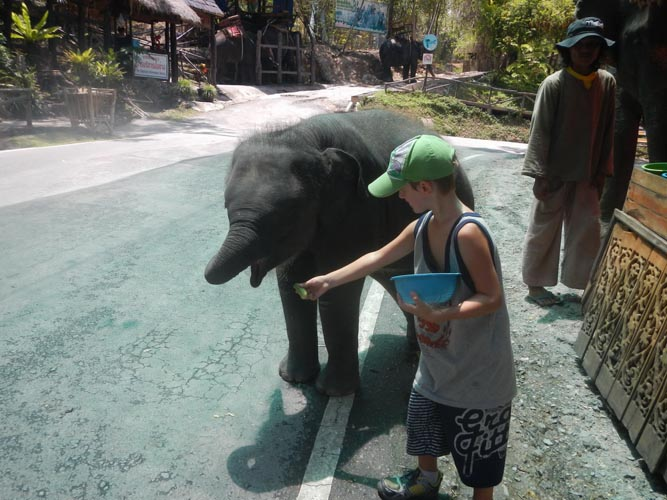 6 elefante 01-2