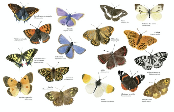 borboletas la fora