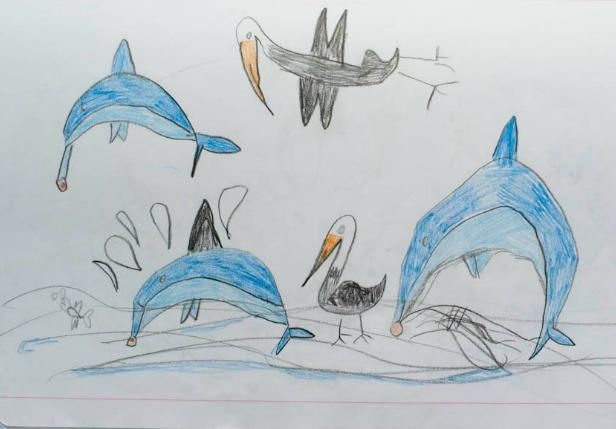 golfinhos de monkey mia