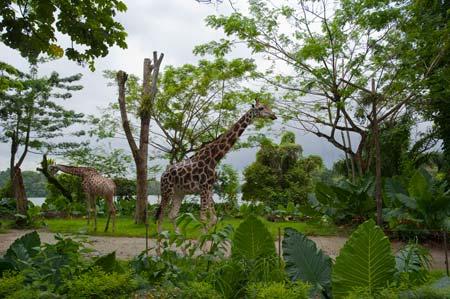A visita ao Jardim Zoológico foi um dos pontos altos da passagem por Singapura
