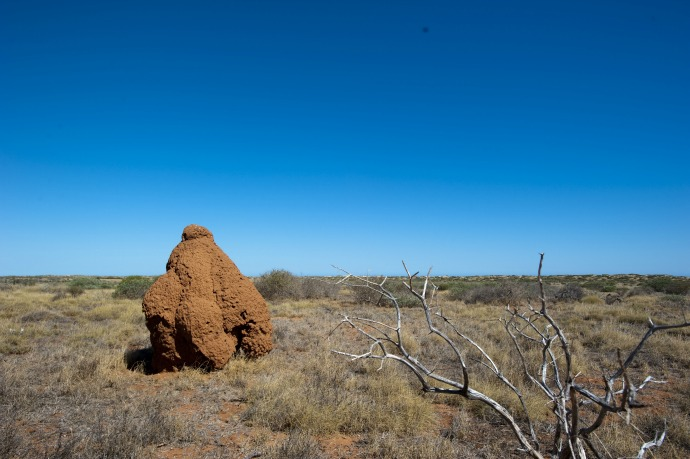 termiteira